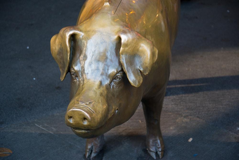 Rachael-the-pig-1067