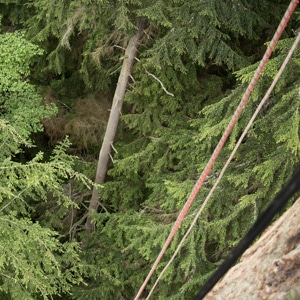 Canopy Tree Climbing